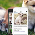 Build a List of Pets for Adoption App with React Native – Part 2